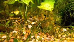 Как избавиться от бурой водоросли в аквариуме