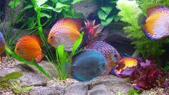 Почему аквариум мутный