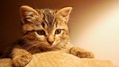 Куда отдать кота на передержку