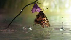 Куда прячутся бабочки