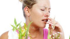 Куда обратиться с аллергией