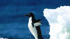 Почему Антарктиду назвали Антарктидой