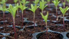 Как развивается растение из семени