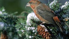 Какая птица на морозе гнездится