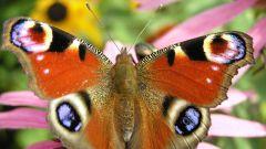 Куда зимой прячутся бабочки и комары