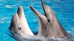 Какие звуки издают дельфины