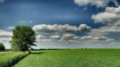 Как оформить неприватизированную землю в собственность