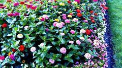 Как посадить цветы на клумбе