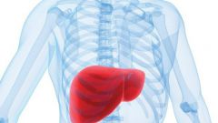Why liver hurts
