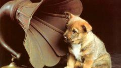Каким бывает музыкальный слух?
