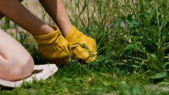 Как эффективно бороться с сорняками