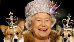 Какой породы собака английской королевы?