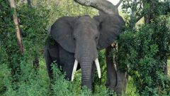 Где живут слоны