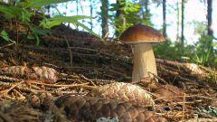 Где растут грибы