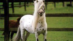 Какие лошади самые маленькие по росту?