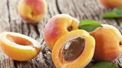 Едят ли абрикосовые косточки и чем они полезны
