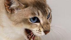 Когда кошки стали домашними животными?