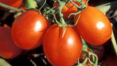 К чему снятся помидоры?