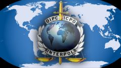 Как называется международная полиция и каковы ее функции?