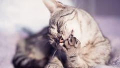 Кошка в доме - польза или вред?