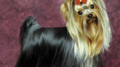 Как делать стрижку собак