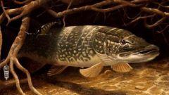 Какие рыбы водятся в реках