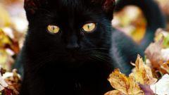 Магия черных кошек