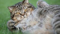6 причин завести кошку
