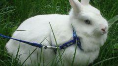 Как содержать кролика в домашних условиях
