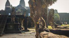 Самостоятельное путешествие в Камбоджу