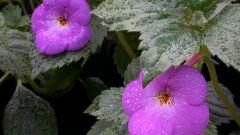 Как часто надо менять землю в горшках комнатных цветов