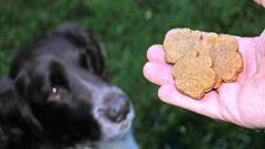 Есть ли мясо в сухих кормах для собак и котов
