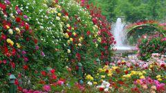 Пряные травы и садовые цветы на вашем участке