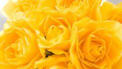 Какие цветы подарить девушке при расставании