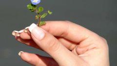 Как вырастить натуральные длинные ногти