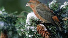 Какие птицы и млекопитающие размножаются только зимой