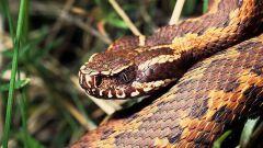 Как перестать бояться змей