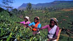 Где находится Шри-Ланка