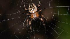 К чему снится паутина с пауками