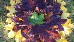 Какие аппликации можно сделать из осенних листьев