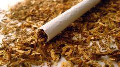 Как вредит никотин в сигаретах
