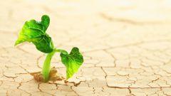 Движение растений и их органов