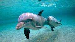 Едят ли дельфинов