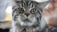 Какие симптомы инсульта у кошки