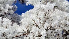 Какие есть загадки про зиму и снег