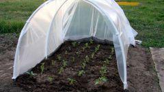 Как защитить сеянцы от холода