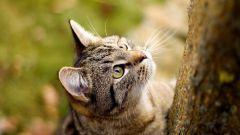 От какого вида кошачьих произошли домашние кошки