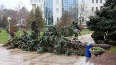 Деревья в городах - источник опасности?