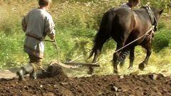 Чем отличаются огородничество и земледелие