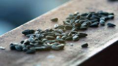 Можно ли прибавить в весе от жаренных семечек